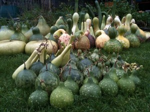 Alternatives in gourds