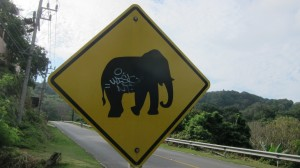 Natalie Hill in Thailand - watch out for elephants